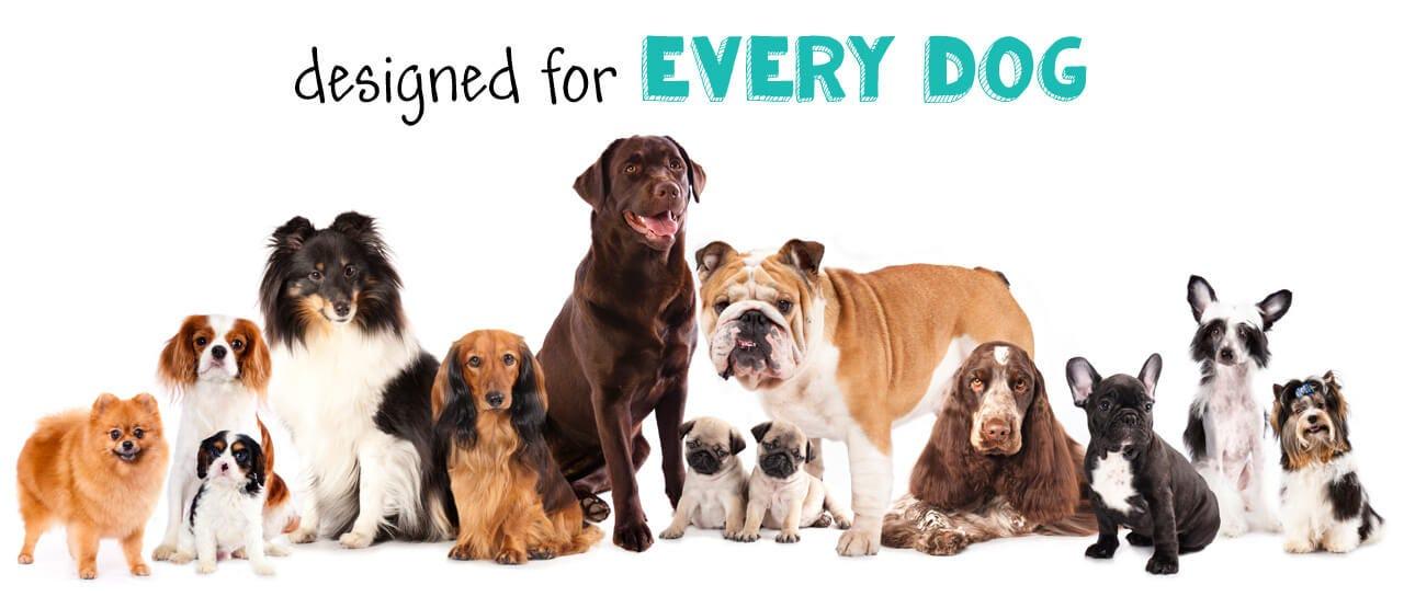 Designed for Every Dog